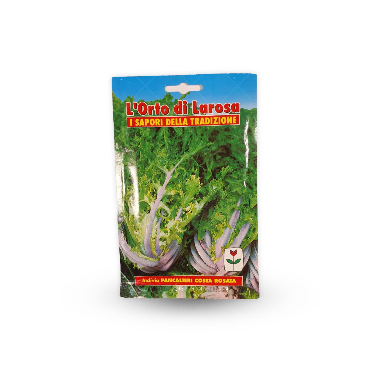 بذر آندیو سالادی یا کاسنی فرنگی ایتالیایی
